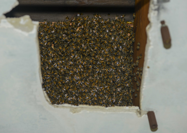 picture of honey bees in the wall of a Germantown TN home